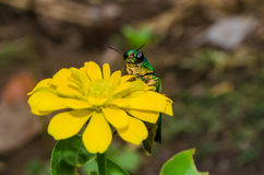 Insects and Flowers Royalty Free Stock Images