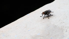 Insects fly close Royalty Free Stock Images