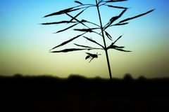 Insects fly pursuit Elite grass, silhouette.  Royalty Free Stock Image