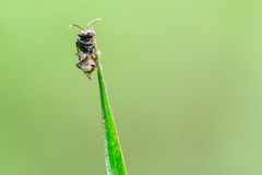 Insects on the grass Stock Photography