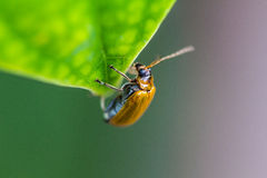 Insects on a green leaf in spring. Stock Photography