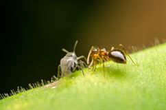 Insects On Green Leaf Talking Concept Stock Photos