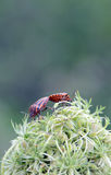 Insects on a green plant , macro Royalty Free Stock Photos