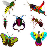 Insects Royalty Free Stock Photo