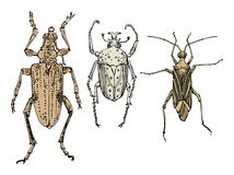 Insects. Hand draw insects on white background Royalty Free Stock Photography