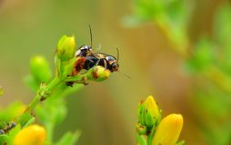 A pair of insects on a flower stalk royalty free stock images