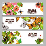 Insects Horizontal Banners Stock Photo