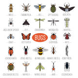 Insects icon flat style. 24 pieces in set. Colour version vector illustration