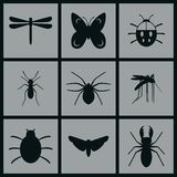 Insects Icons. Set of Icons on a theme Insects Royalty Free Stock Images