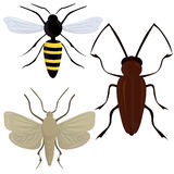 Insects illustration Royalty Free Stock Photos