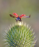 Insects In The Nature Royalty Free Stock Photography