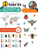 Insects infographic template royalty free illustration