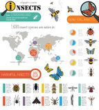Insects infographic template Stock Image
