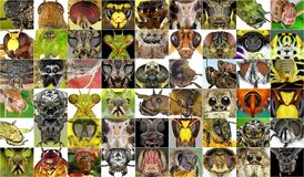 Insects stock photos