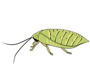 Insects with its antenna Royalty Free Stock Photography