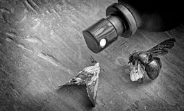 Insects killed by spray Royalty Free Stock Photos