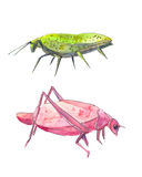 Insects like leaves. Pink and green grasshopper. Stock Images