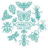 Insects line icons. Set of vector outline insects icons arranged in circle royalty free illustration