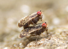 Insects mating On stone Stock Image