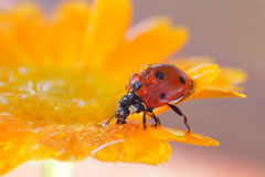 Insects in the nature Stock Image