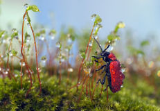 Insects in the nature Royalty Free Stock Photos