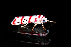 Insects at night 3 Royalty Free Stock Photo