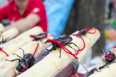 Insects over. Royalty Free Stock Photography