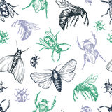 Insects Pattern. Stock Photos