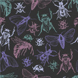 Insects Pattern. Stock Photo