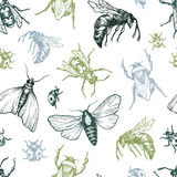 Insects Pattern. Royalty Free Stock Image