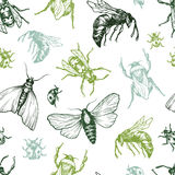 Insects Pattern. Stock Photography
