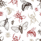 Insects Pattern. Hand drawn vector pattern with insects in different poses. Moth, butterfly, bee. Vector collection. Detailed realistic sketches. Ink, pen Stock Image
