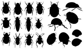 Insects. Quality vector beetles of different species. Fine enliven and complement any image on the theme of nature and life forests, meadows, gardens Royalty Free Stock Image