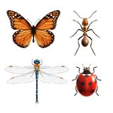 Insects realistic set Royalty Free Stock Image