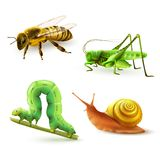 Insects realistic set Royalty Free Stock Photo