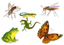 Insects and reptiles. Fly, two lizards,butterfly and mosquito on a white background Stock Photo