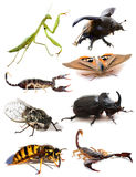 Insects and scorpions. In front of white background Royalty Free Stock Photos