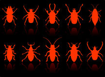 Insects Set Stock Image