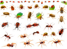 Insects set Royalty Free Stock Photography