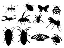 Insects. Set of different types of insects, in black color Royalty Free Stock Photo