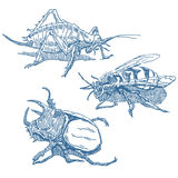 Insects set Royalty Free Stock Photo