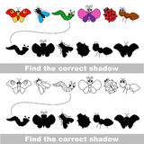 Insects set. Find correct shadow. Insects set with shadows to find the correct one. Compare and connect objects. and their true shadows Stock Photo