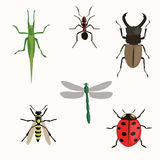 Insects set. Illustration on a white background Stock Images