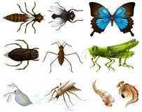 Insects set on white background Stock Photos
