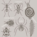 Insects. Seven bugs Stock Photo