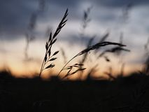 Goodnight little ones. Insects silhouettes on a grass against the dusk sky. Silhouette photo. Twillight sky Stock Image