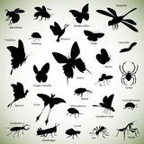 Insects silhouettes. Set of insect silhouettes on abstract background Stock Photos