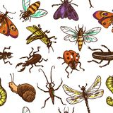 Insects sketch seamless pattern color Stock Photo