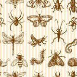 Insects sketch seamless pattern monochrome Royalty Free Stock Images