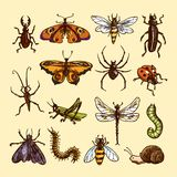 Insects sketch set Royalty Free Stock Images